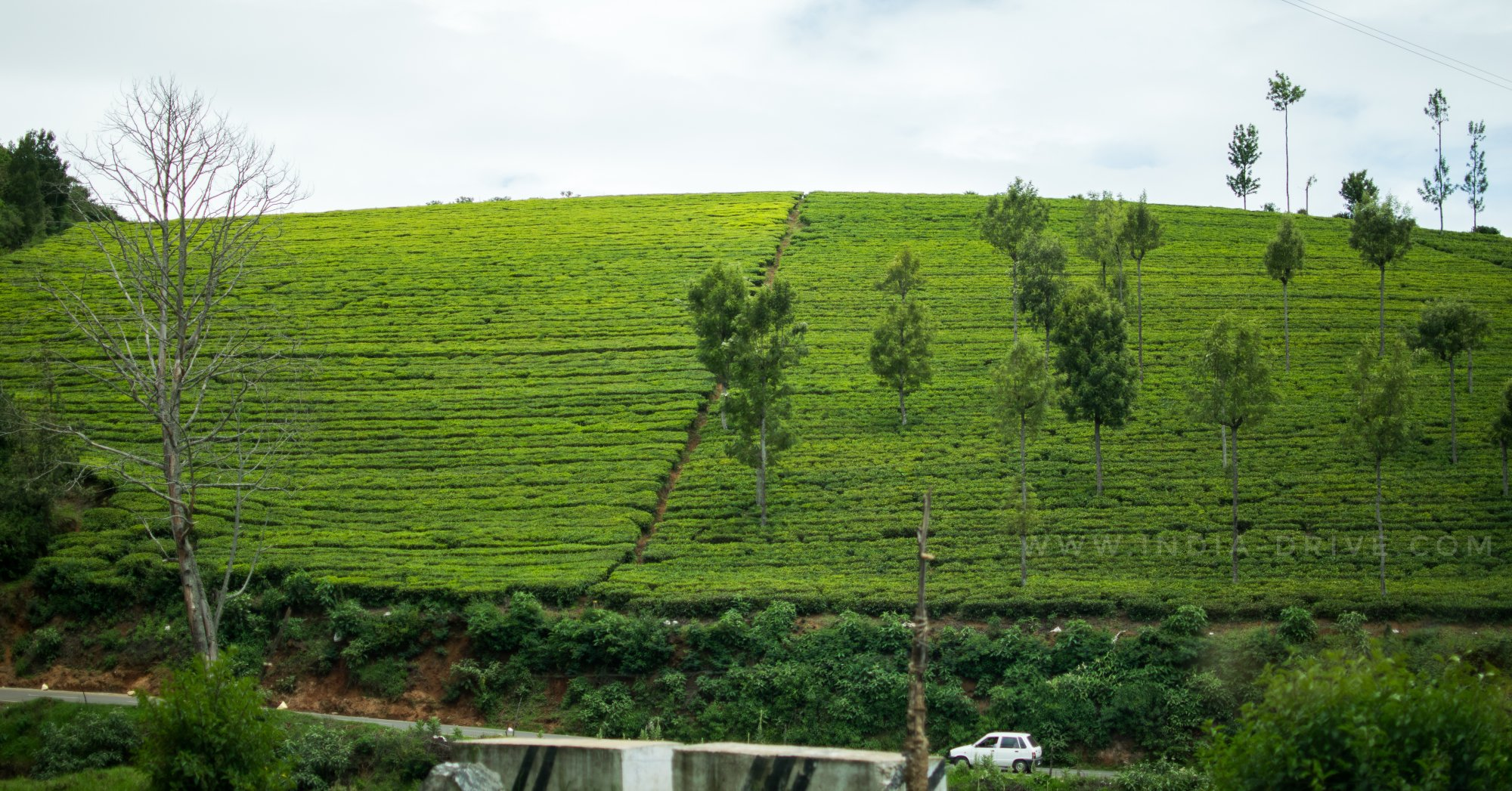 IND DRV OOTY- DAY 3-12-01.jpeg